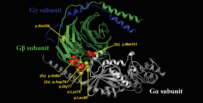 Columbia researchers have identified a new neurodevelopmental disorder caused by mutations (labeled red and yellow in the image) in the GNB1 protein (labeled green). (Credit: American Journal of Human Genetics)